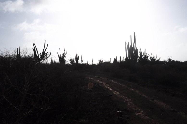 A trail through Aruba's desert landscape.