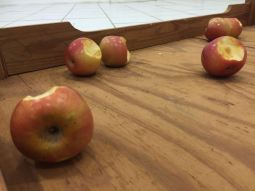 Humberto Diaz, Tasting the Universe, Wooden Table, apples, Dimensions variable, 2016. Photo courtesy of Humberto Diaz